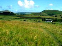 イースター島の草原