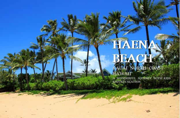 ハエナビーチの椰子の木