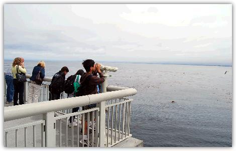 テラスからのモントレー湾の眺め