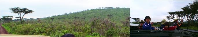 ンゴロンゴロのサファリ