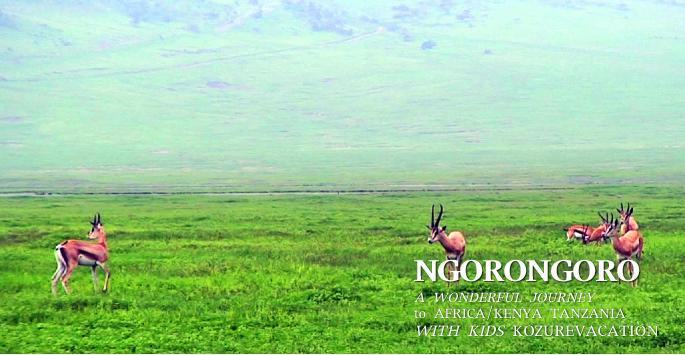 ンゴロンゴロクレーターの動物達