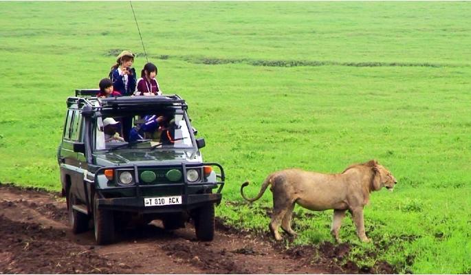 サファリーカーとライオン