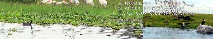 ナイバシャ湖の野鳥の群れ