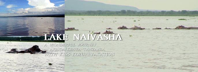 ナイバシャ湖のカバ
