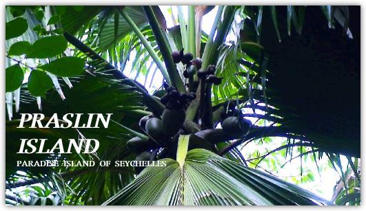 プララン島の世界遺産ココデメールの森