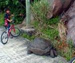 サイクリングの途中でゾウガメと遭遇