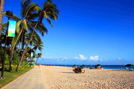 フォートデルシービーチパークの遊歩道。青い空に向かってに椰子の木が伸びている。