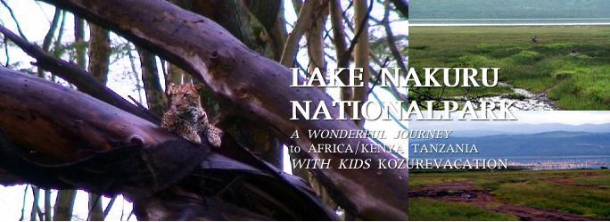 ナクル湖の野生のヒョウ