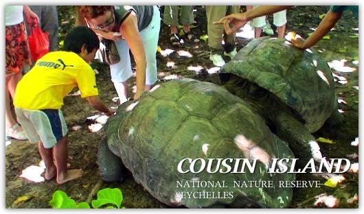 クーザン島で遭遇したセイシェルゾウガメに触る子供達