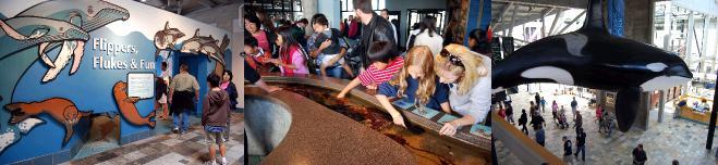 モントレーベイ水族館を見学する子供達