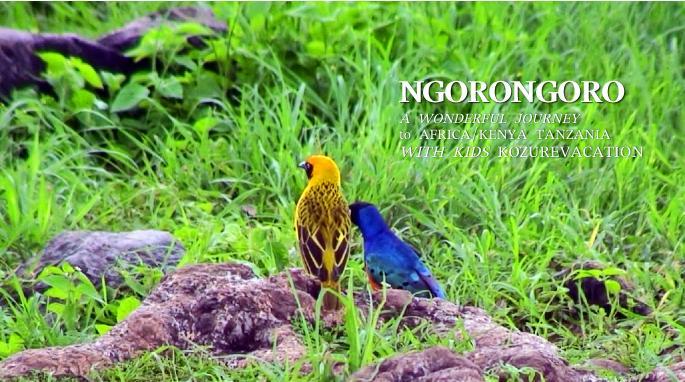 ンゴロンゴロの野鳥