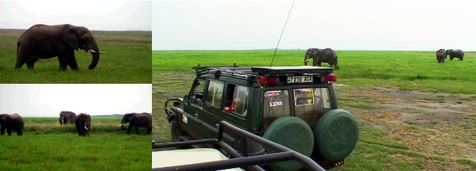 サファリカーの周りに集まってくるゾウたち