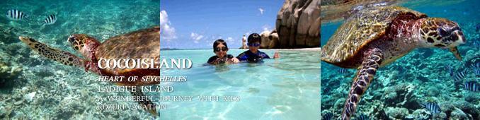 ココ島の海中でウミガメと遭遇