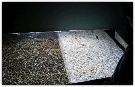 モントレーベイ水族館の特徴である対話型展示