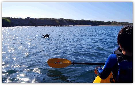 カヤックを漕いでラッコに接近する