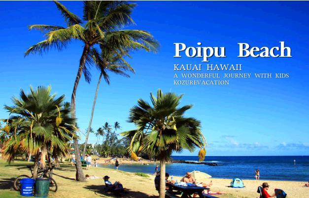 ポイプビーチパークの椰子の木