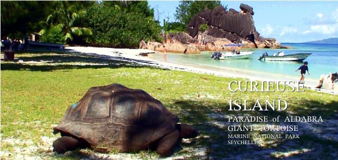 キュリーズ島のビーチとゾウガメ