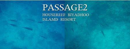 ビヤドゥ島の南側のハウスリーフを泳ぐイカの群れ