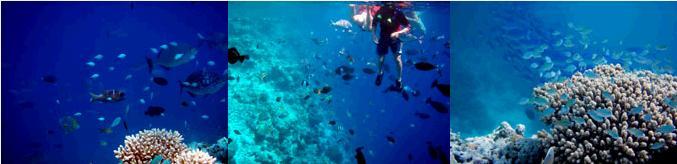 モルジブの海で泳ぐ子供達
