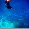 モルジブの海でのスキンダイビングをする