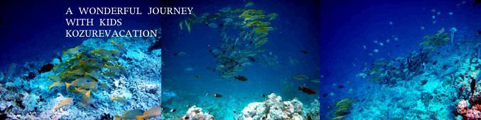 極上のハウスリーフを泳ぐヨスジフエダイの群れ