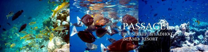 パッセージ1の海中写真