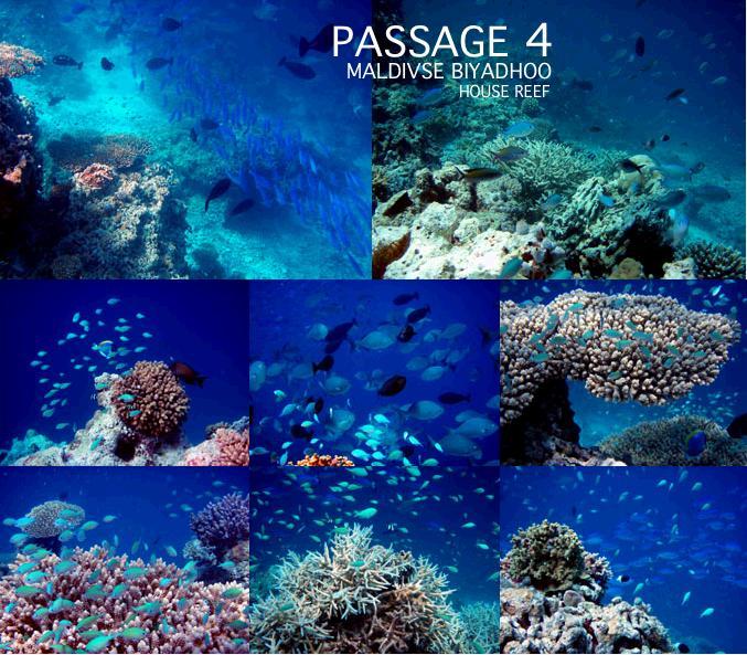 パッセージ4で子連れシュノーケリングをしながら撮影した海中写真