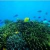 シラデン島の珊瑚礁