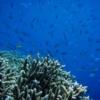ティムール1の海中写真