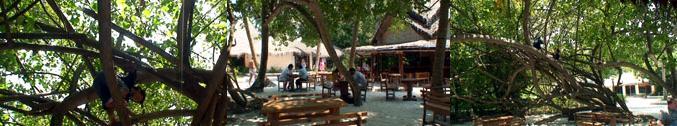 バーの前の広場とジャングルジムのような大木