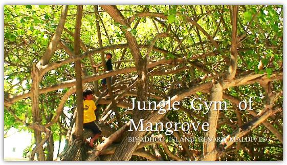 マングローブのジャングルジム