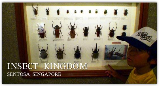 昆虫博物館の標本