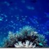 モルジブの海中で撮影した写真
