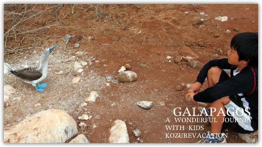 マダガスカルでカツオドリを観察する