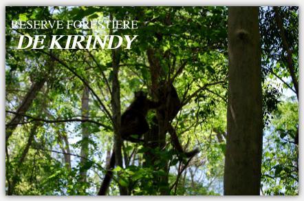 キリンディー森林保護区