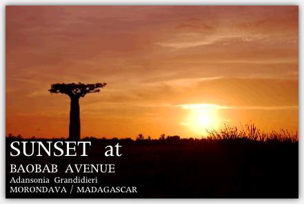 バオバブ並木と真っ赤に染まる夕日