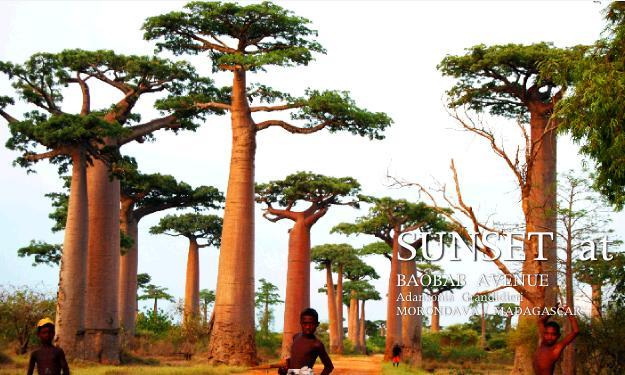 バオバブ並木の夕焼け