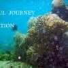 ハウスリーフの海中写真