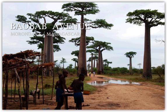 サカバラ族の子ども達とバオバブの写真