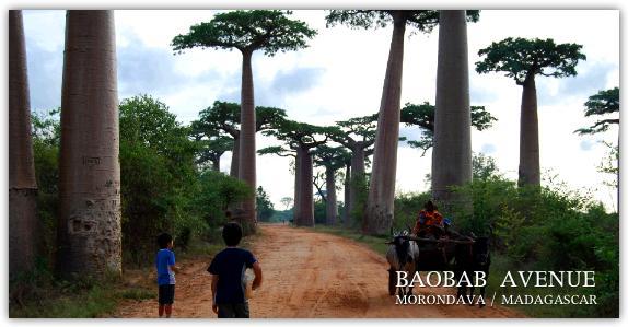 バオバブ並木を歩く子ども達の写真