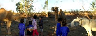 キャンプ場の動物園