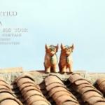 屋根の上の陶器