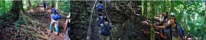 ジャングルの中を登る