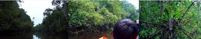 キナバタンガン川の支流に入る