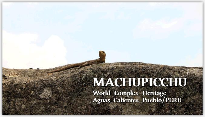 マチュピチュの生き物