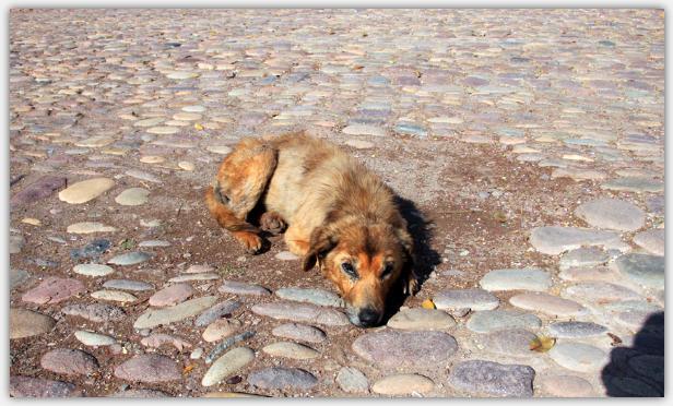 路上で昼寝する犬