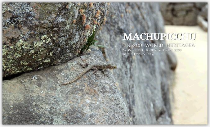 マチュピチュで見つけたトカゲ