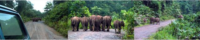 ゾウに道をふさがれた