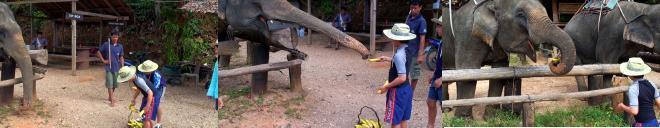 象にバナナをあげる子ども達