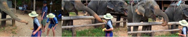 子ども達が渡すバナナをむしゃむしゃ食べる象
